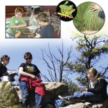 Collage of students observing ecosystems from Project GUTS webpage